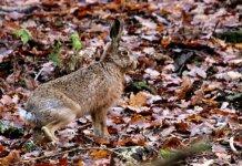 hare - 2021_01_12_1726 - 2 - 2056 - 25.jpg