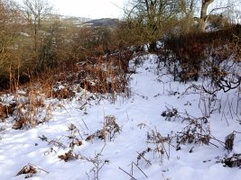 snowy track - 1920 - 25 - TG551109.jpg