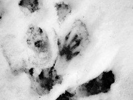 tracks - squirrel 1 - 1920 - 25 - TG551107.jpg