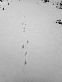 tracks - hare 2 - 1920 - 25 - TG551111.jpg