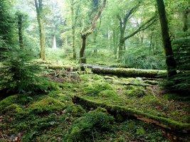 Beddgelert Woodland - TG552114.jpg