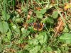 Wyeswood Red Admiral.jpg