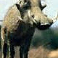 warthog1981