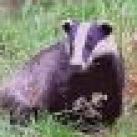 barking badger