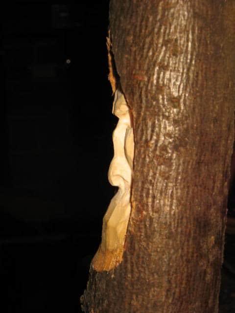 woodspirittutorial038