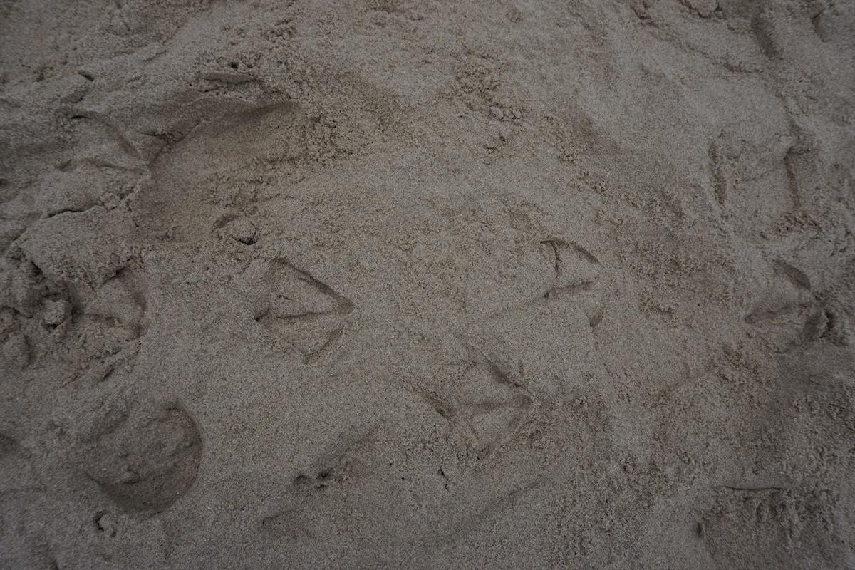 seagul_feet
